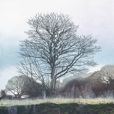 Beech on the Beacon painting by artist Annie OVENDEN