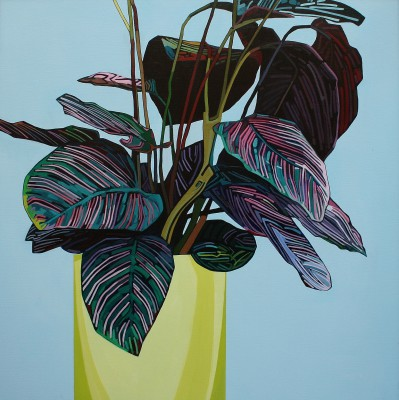 Donald MacLEAN - Calathea, Yellow Pot