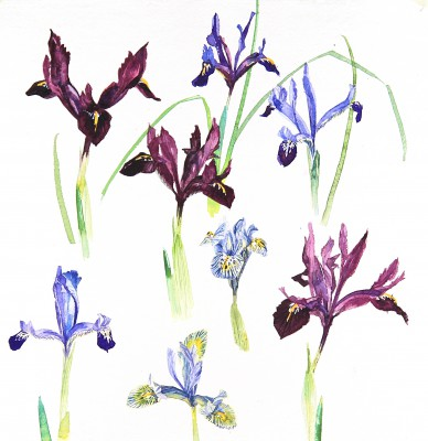 Modern Artist Jenny MATTHEWS - First Flowers of the Year II