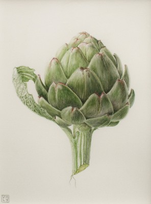 Little Artichoke painting by artist Louise YOUNG